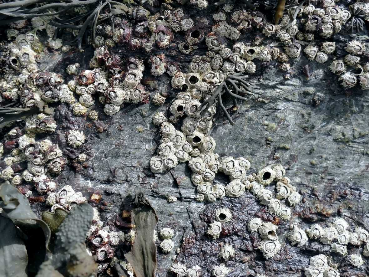 I-Tech research finds that even before COVID-19, over 40% of vessels had unacceptable levels of barnacle fouling