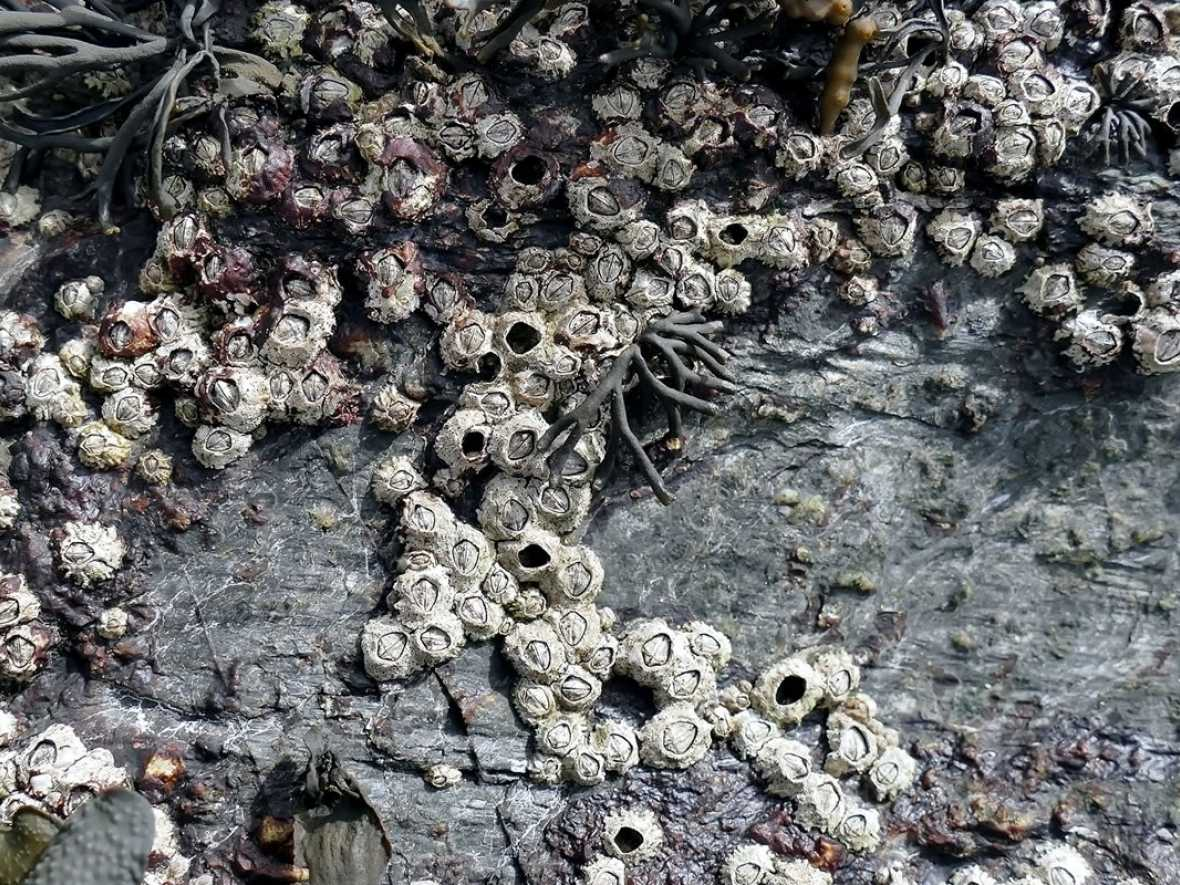BIMCO announces biofouling survey and bunker clauses